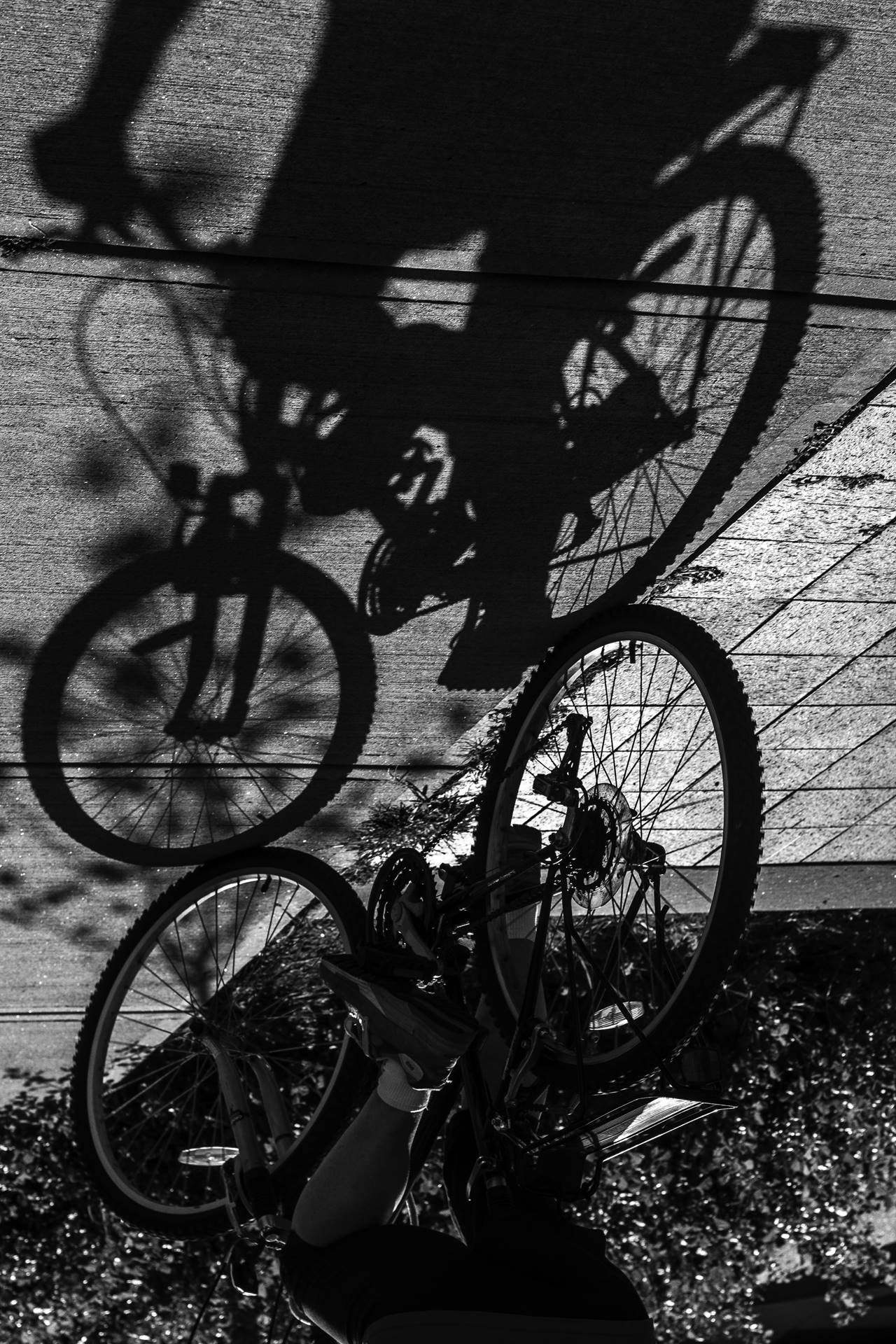 Person on a bicycle and their shadow